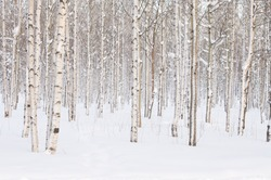Trees in the park or the woods in winter snow