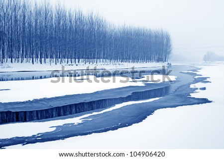 trees in the snow north china