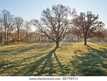 Trees in the sun