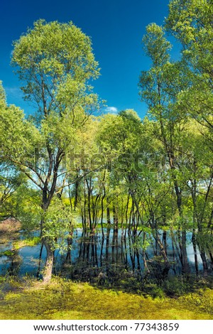 Trees in the swamp near Narew river, Poland