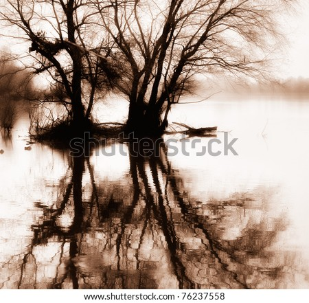 trees in the water with the reflection in sepia