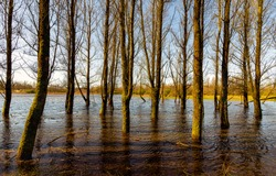 Trees in water flooded scene. Flooded trees in water. Trees flooded in water