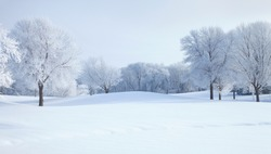 Trees in winter covered with hoar frost on a bright morning in Minnesota