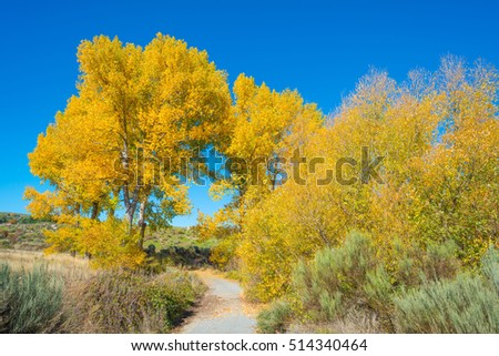 Trees in yellow autumn colors in sunlight - Shutterstock ID 514340464
