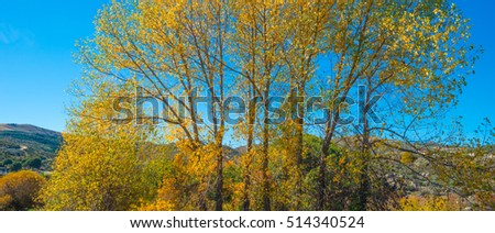 Trees in yellow autumn colors in sunlight - Shutterstock ID 514340524