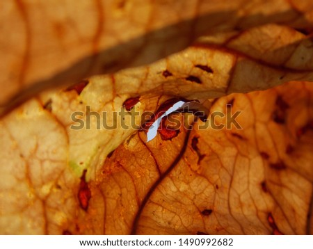 Trees leaf has a purpose of give life to tree not itself.