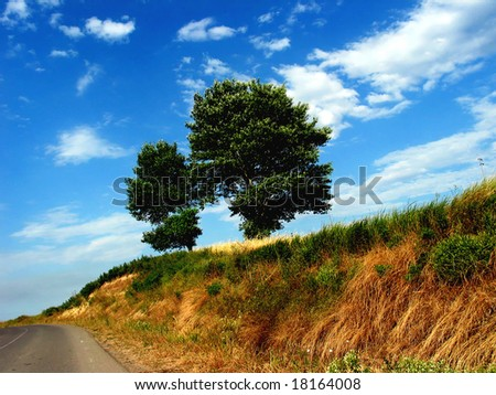 trees near of road,over sky background,autumn