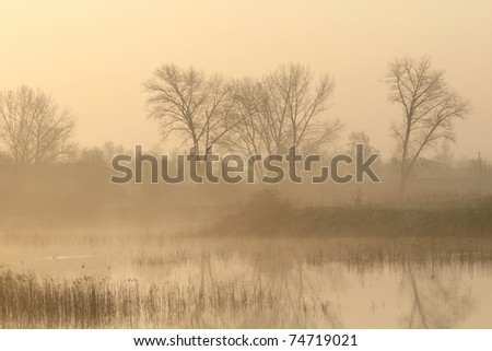 Trees near the pond on a foggy early spring morning.
