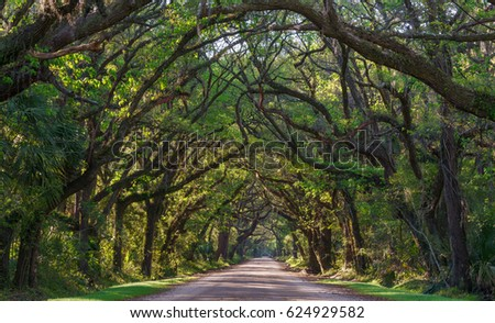 Trees of Botany Bay Edisto Island, South Carolina