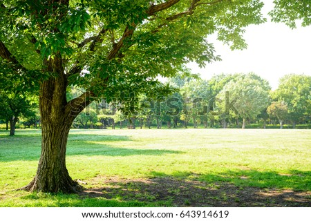 trees of parks on sunny days
