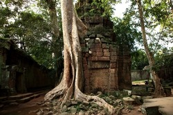 Trees of the tempel complex Angkor Watt in Cambodia over growing all the tempels and houses.