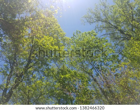 Trees on a windy day