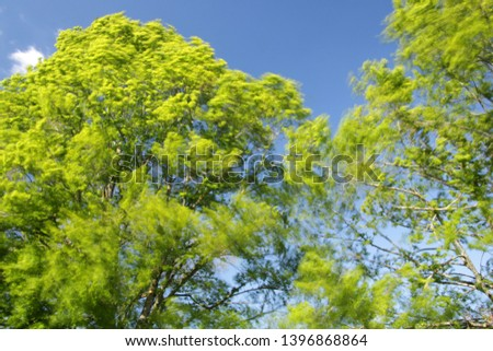 Trees on a windy spring day