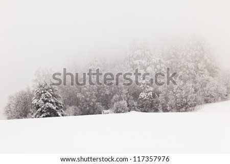Trees on a winter snow-covered field