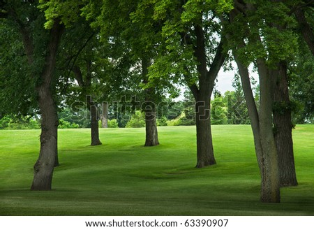 Trees on Grassy Incline  - edge of park or golf course