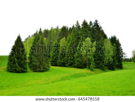 Trees on green field on white background. - Shutterstock ID 645478558