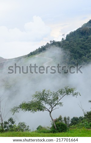 Trees, on his path, fog, mountains, misty morning, the morning fog, high-resolution images.
