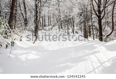 trees on snow land