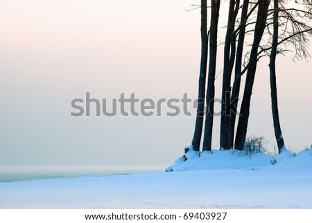 trees on the beach in winter against the sea of pastel colors