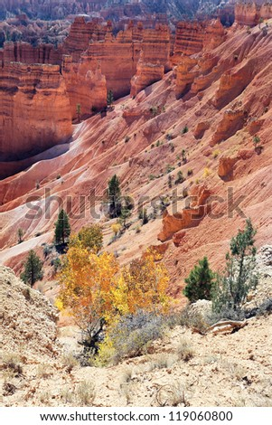 trees on the Navajo Trail in Bryce Canyon, USA