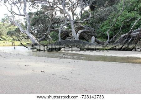 Trees On
