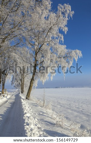 Trees on the roadside with a snowbank