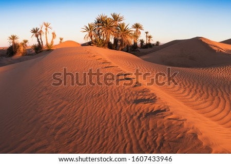Trees on the Sahara desert, Merzouga, Morocco Colorful sunset in the desert above the oasis with palm trees and sand dunes. Beautiful natural background -African oasis. Global warming in Africa Foto stock ©