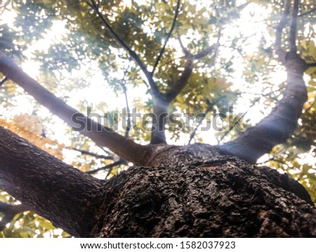 Trees or staples are woody plants, and are divided into two groups of plants: First, a group of rooted trees (dicotile) consisting of tree trunks is the main trunk that grows upright tree canopies,. #1582037923