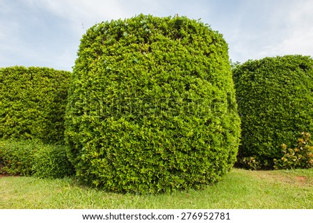 Trees, ornamental gardens, home decor