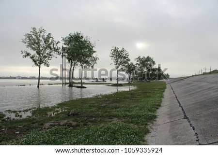 Trees peak out of the mist as flood waters rise against the levees in New Orleans, Louisiana ストックフォト ©