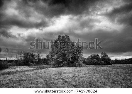 trees, rain clouds, deciduous forest autumn landscape