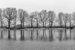 trees reflected in the lake - black & white