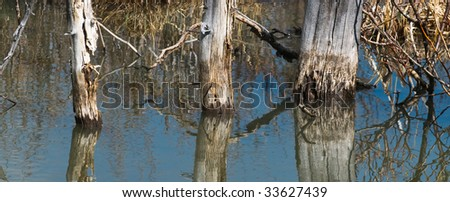 trees reflecting in a pond
