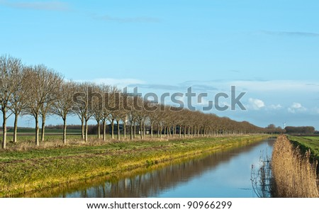 Trees reflecting in water of a canal, Netherlands