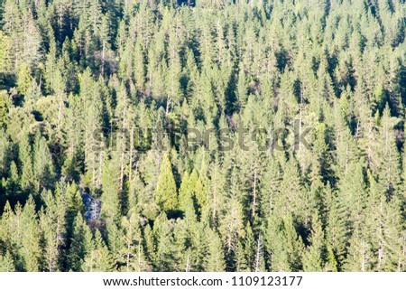 trees seen from yosemite falls...