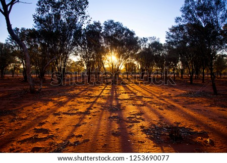 Trees silhouetted by a sunset. Light rays stream through trees in the Australian outback. Balonne Queensland. Fingers of god illuminate red bushland.