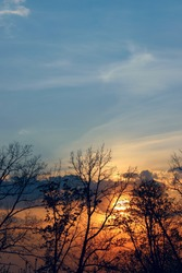 Trees silhouettes against the sunset sky. Nature, travel concept. Beautiful nature background, horizontal view, space for text.