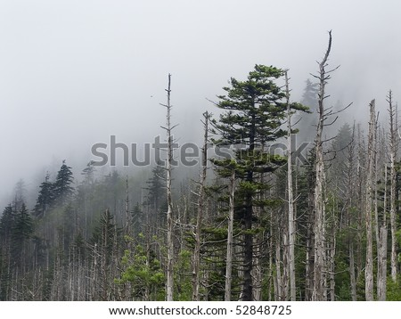 stock-photo-trees-snags-and-fog-clingmans-dome-great-smoky-mountains-np-52848725.jpg