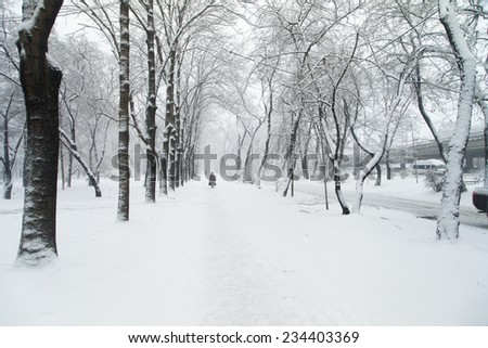 Trees stand, powdered with snow in snow weather #234403369