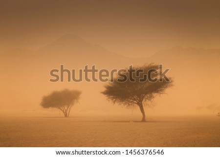 Trees struggling with the intense sandstorm