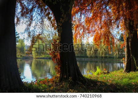 Trees view of the lake reflections - Shutterstock ID 740210968