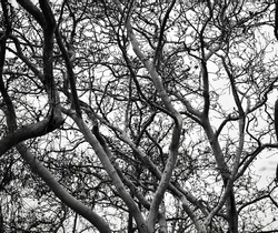 trees with barren branches during winter