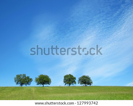 trees with blue sky and clouds 31 #127993742