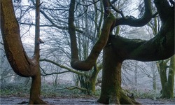trees with boughs branches bigger than their trunks like scary weird movies