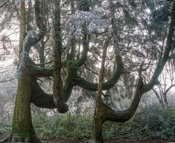 trees with boughs branches bigger than their trunks look like props in a scarie weird movie