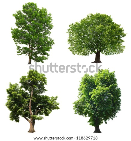 Trees with green leaves isolated on white background