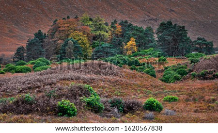 Trees with leaves changing colour growing in scenic valley and hill slope in background.Autumn in Scottish Highlands.Tranquil nature scene.Majestic landscape of Scotland,UK.