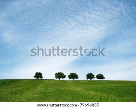 trees with sky 5