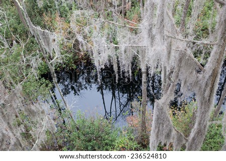 Trees with Spanish Moss hanging from the branches and swamp water, from the Okefenokee Swamp in South East Georgia, USA