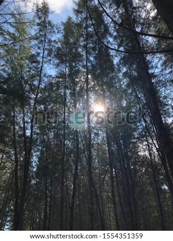 Trees with sunlight coming through #1554351359